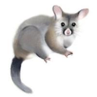 Hamster, Banksy, Street Art, Graffiti, Artist, Stencil, Art Museum,  Painting transparent background PNG clipart   HiClipart
